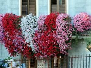 Idee per un balcone fiorito for Gerani tirolesi