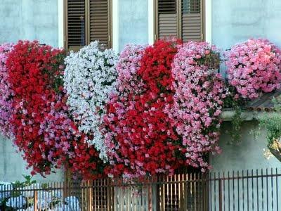 Idee per un balcone fiorito for Case ricoperte di edera