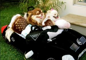 Dimora di lusso per i cagnolini di Paris Hilton