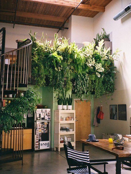 Come curare le piante da interno in inverno - Arredare con le piante da interno ...