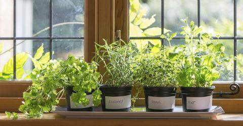 piante medicinali da coltivare in inverno
