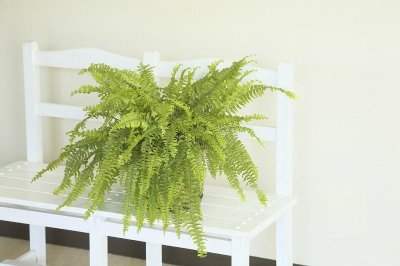 Le piante che purificano l'ambiente