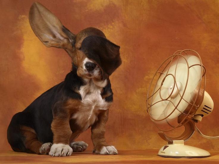 Rinfrescare casa in estate senza aria condizionata si puó