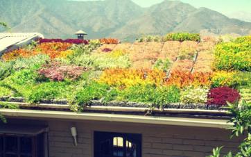 Tetti verdi ed ecologici: l'Ecotetto