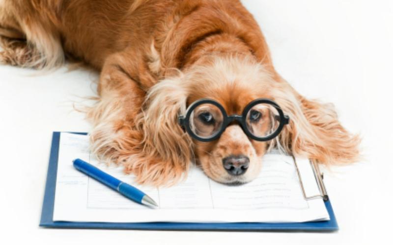 Risoluzione del contratto d'affitto, procedure da espletare