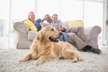 Regole fondamentali per vivere con un cane in casa