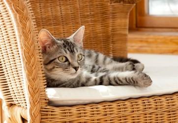 Come arredare casa a seconda del carattere del proprio gatto
