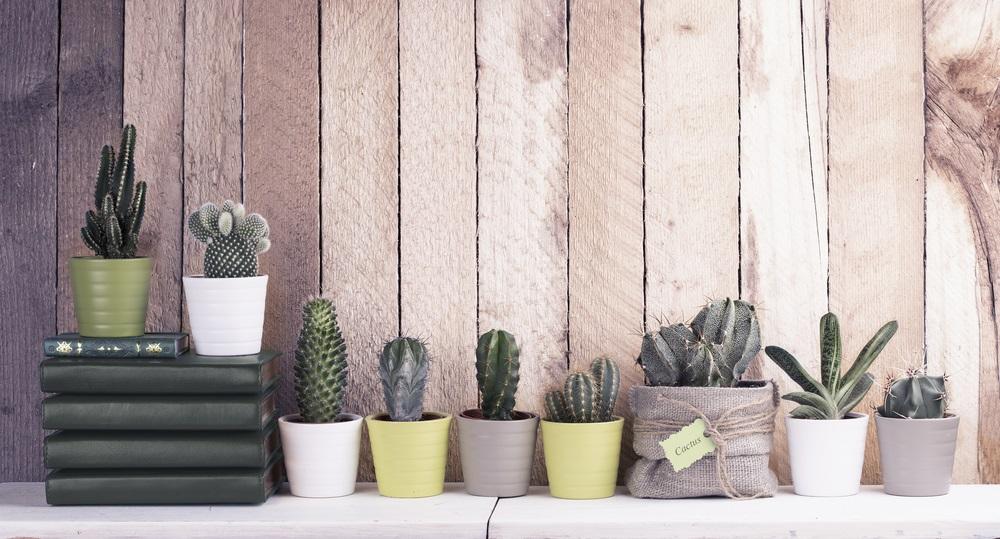 Coltivare le piante grasse in casa semplice e divertente - Piante grasse in casa ...
