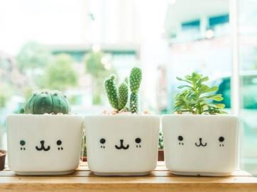 Coltivare le piante grasse in casa: semplice e divertente