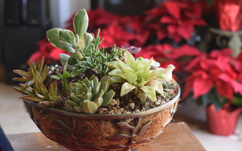 Coltivare le piante grasse in casa semplice e divertente for Piante grasse in casa