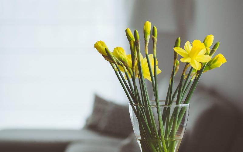 Piante in casa: decorazione e cura per la terra
