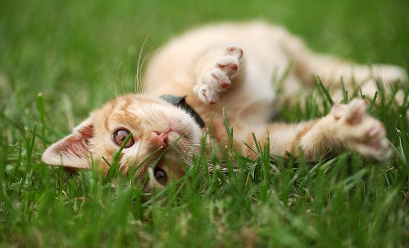 Colonie feline in condominio, quali regole vanno rispettate