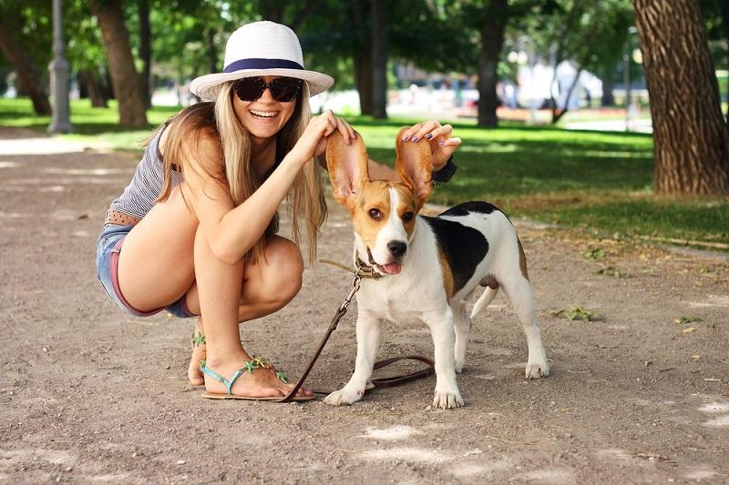 Come proteggere il vostro animale domestico dal calore di questa estate