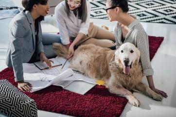 Grosseto: meno tasse se adotti un cane
